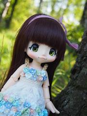 Have you already seen my new dress? (sh0pi) Tags: kinoko juice doll puppe kiki kikipop 3rd series sunny bunny date chocolate azone dress kuloft 2016 flowers outside