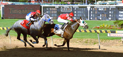 2016-08-28 (58) r8 Julian Pimentel on #2 Great Smoke (JLeeFleenor) Tags: photos photography md maryland marylandracing marylandhorseracing timonium statefair jockey   jinete  dokej jocheu  jquei okej kilparatsastaja rennreiter fantino    jokey ngi horses thoroughbreds equine equestrian cheval cavalo cavallo cavall caballo pferd paard perd hevonen hest hestur cal kon konj beygir capall ceffyl cuddy yarraman faras alogo soos kuda uma pfeerd koin    hst     ko  outside outdoors sports sport