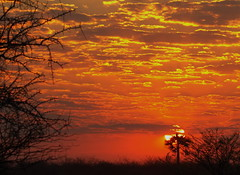Palm Tree in Yellow and Red Sunrise , Onguma Reserve, Etosha, Namibia, Africa K__37330 2 (Mike07922, 3 Million+ Views - thanks guys) Tags: etosha namibia africapentaxk3