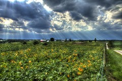 Light pushing through the Storm (TDotson) Tags: canon canon70d hss hdr happysliderssunday sliderssunday browncountyohio browncounty farmlife farm farmscene countryscene countryroads countrylife countryliving agriculture appalachia