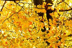 Wonderful Autumn (dodinatop) Tags: parque naturaleza arboles nature autumn otoo wood trees park geneva