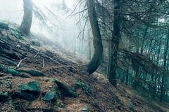 Foggy Forest (kanedo-projekt) Tags: monschau pflanzen wandern eifelsteig eifel zelten wald natur landscape nature pflanze forest