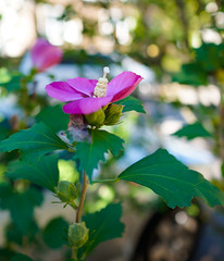 Autumn flowers (Z!SL) Tags: nex5r nyc newyork newyorkcity brooklyn fall autumn sel24f18z sel24f18za sel24f18 zeiss carlzeiss sonnar2418za sonyphotographing sonnar sonnarte1824 sony sonyflickraward emount minoltaemount mirrorless nature bokeh bokehwhores dof depthoffield pink purple