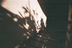 Shadow #3 (MaskedPanda) Tags: light shadow sunlight film stairs 35mm la lomo lomography sardina shadows stairway fujifilm domino toycam