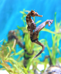 """What The World Needs Now Is Love"" (julesnene) Tags: world sanfrancisco love aquarium is seahorse what anilao needs now seahorses californiaacademyofsciences the steinhartaquarium underwatercreatures whattheworldneedsnowislove shotthroughtheglass dedicatedtohaldavid"