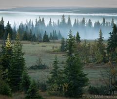 Early morning on Brnnker-2 (Fjllkantsbon) Tags: morning mist early lappland lapland skog gran sverige spruce morgon dimma dorotea naturreservat tidigt gitsfjllets