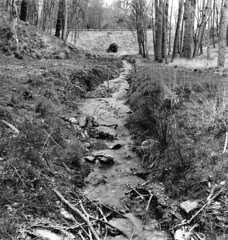 Small river near the furry glen (Dave Road Records) Tags: trees ireland blackandwhite dublin landscapes rivers phoenixpark filmphotography irishlandscapes
