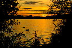 Two Little Ducks (stumpyheaton) Tags: sunset silhouette nikon ducks pickmere d5100