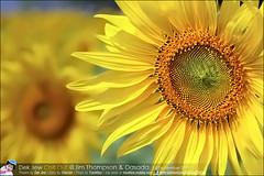 1Day-trip-Jim-Thompson-Farm&Dasada-Gallery_E12663461-027