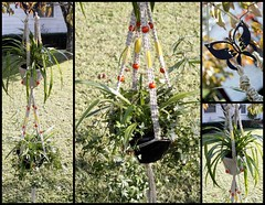 September Butterfly- Handmade Natural Hemp Double Macram Plant Hanger (Macramaking- Natural Macrame Plant Hangers) Tags: autumn color green fall beauty vertical hippies garden fun happy beads october colorful natural bright gardening handmade fallcolors decorative character cottage creative adorable funky double autumnleaves september dandelion hanging americana balance fengshui chic cheerful boho groovy knots hang bohemian homedecor hanger multicolor macrame fibers madeinusa ecofriendly accessory conversationpiece hangingbasket custommade blackmetal brightorange brightyellow hangingbaskets bohochic containergardening macram spacesaving falldecor hangingplanter macramebeads decorativeknotting naturalhemp macrameplanthanger macramakin macramaking httpwwwetsycomshopmacramaking macramecord indoorplanters macrammacramaking macracord macrametechnique macramehangingbasket macrameweaving macramelove