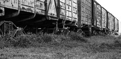 vagones (_miglesias) Tags: blackandwhite bw abandoned argentina grass station train buenos aires sunny traincar vagues