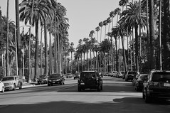 Beverly Hills (reflexbeginner) Tags: sanfrancisco nyc bw usa newyork nature america landscape nationalpark nikon honeymoon unitedstates nikkor viaggiodinozze statiuniti d90 wonderfulview