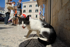 Meow~~~ (Lin.y.c) Tags: travel cat europa europe croatia d200 dubrovnik adriatic