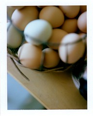 fresh eggs (EllenJo) Tags: food home polaroid basket ivan egg september eggs 2012 saturdaymorning landcamera fresheggs closeuplens polaroidlandcamera instantfilm september29 fujifp100c fujiinstantfilm ellenjo closeuplens2 ellenjoroberts timandruth polaroidpathfinder rollfilmcameraconvertedtopackfilm convertedpathfinder