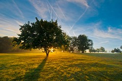 The light shines on (James Waghorn) Tags: autumn light england sky sun mist tree sunrise kent nikon sigma contrails ultrawide lightroom sigma1020 d5000 blinkagain bestofblinkwinners blinksuperstars