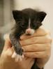 20121003_5898 (Fantasyfan.) Tags: pet baby white black look animal topv111 cat furry kitten hand small stripe fluffy tiny fantasyfanin rasitus