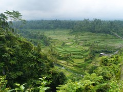 Rice terraces, Mahagiri, Rendang, Bali (Niall Corbet) Tags: bali green field indonesia rice paddy terrace paddyfield rendang mahagiri