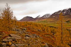 Rainy day in valley Hrgrdalur. (joningic) Tags: autumn trees sky mountains fall nature colors rain yellow iceland rainyday hrgrdalur snowymountanins