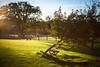 (drfugo) Tags: wood autumn light sunset shadow sky tree apple grass fence table dof bokeh shrub f12 canon5dmkii nikon55mmf12s nikkors55mmf12typeiv niceapplesthough