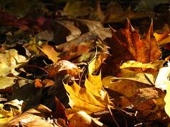 jesienny galimatias :) (ela_s) Tags: