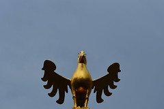The Eagle has landed (Andreas Meese) Tags: harz stadt city innenstadt altstadt old town citty center weltkulturerbe architektur architecture nikon d5100 regen rain rainy day goslar eagle has landed adler