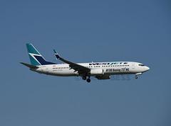C-GAWS (MAB757200) Tags: westjet b7378ct cgaws 100boeing737ng jetliner jfk kjfk landing runway22l aircraft airplane airlines boeing