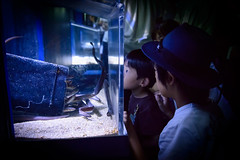 Encountered (H.H. Mahal Alysheba) Tags: indoor aquarium life fish children kids japan nikon d800 afs nikkor 2485mmf3545