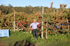 IMG_5928 (mavnjess) Tags: 28 may 2016 harvey edward giblett newton orchards manjimup harveygiblett newtonorchards cripps pink lady crippspinklady popaharv eating apple crunch crunchy biting apples pinklady pinkladyapple harv gibbo orchard appleorchard orchardist