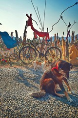 (dilekbal0922) Tags: design art ride bike holiday photographie photo colorfull colors road cute sweet animal cat dog