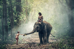 Little Asian boy feeding elephant (Bugphai ;-)) Tags: indonesia children elephant laos vietnam myanmar village people cultural thai thailand surin poor india student kids asia asian cambodia forest countryside rural lifestyle culture big famity works food feed feeding mahout brother dispensation donate donation give deal distribute allot prorate