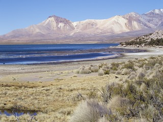 Région d'Arica, Parc Lauca, Lac Chungara