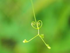 GREEN DANCE (makiko_11) Tags: omd green macro zuiko olympus plant natura heart explore