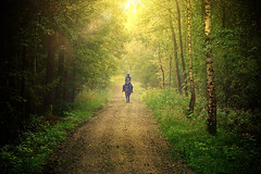 Evening trot. (joseph_donnelly) Tags: forest wald horse pferd evening abend trot run canter jog light sun licht sonne animal ride rider germany bayern bavaria
