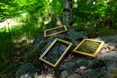 Forest Art (deff0) Tags: fujifilm x100t 23mm suomi finland forest art frame rock trees