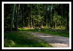 Man into nature - Do not enter (derek_michalski) Tags: manintonature forest poland nature naturallight fineartphotography derekmichalskiphotography