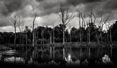 bare trees (dave_harrison56) Tags: deadtrees lake blackandwhite water clouds northumberland canond70 canon24105