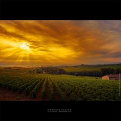 Rays of light in Beaujolais (dominikfoto) Tags: beaujolais brouilly vendanges vignes fusina fusinadominik vine grappe
