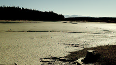We do have time to stand and stare (duncanmc42) Tags: inlet estuary mudflat mudflats shine shiny cloudless trees pines outdoors simplicity peaceful expansive waimeainlet rabbitisland nelson southisland newzealand duncancunningham duncamc42 olympus stylus tg4 compactcamera