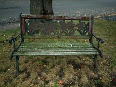 CF002410 (Paul Henegan) Tags: mamiya645afd autumn bench blur f40 rainymorning hbm