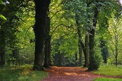 Through the woods (Sundornvic) Tags: woods trees autumn light shadows green paths ways park