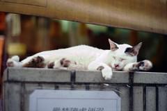 cats everywhere (Steve only) Tags: leitz leica cl canon lens 50mm f12 5012 l39 leicascrewmount leicathreadmount ltm m39 rf rangefinder fujifilm 100 100 film epson gtx970 v750 snaps cats