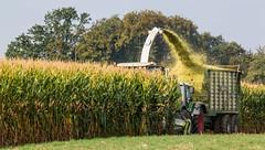 Definitiv voll.. (Fotos aus OWL) Tags: biogas silo silage hcksler traktor tractor fendt jaguar claas hcksel ernte mais