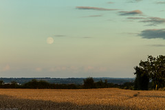 Moonrise at Sunset (Sue_Hutton) Tags: sunset summer landscape sundown leicestershire moonrise charnwood wheatfield shepshed hathern august2012 oakleygrange hathernroad t189522012week35