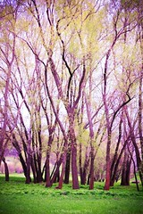 Nature (19) (E.Chistol Photography) Tags: trees inspiration tree art forest wow landscape fun spring cool nice funny colorful awesome tourist attraction moldova mistery природа лес молдова echistolphotography
