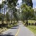 Strada per Cocora