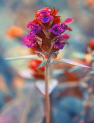 Wild flower (Gena Golovskoy) Tags: wild flower