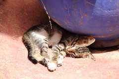 Almost shade (mussy5) Tags: africa cat kitten morocco shade marrakesh canonef24105mmf4lisusm canon550d smusgrove2012