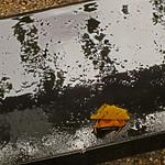 Prinsjesdag, herfstblad op bank Lange Voorhout thumbnail