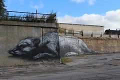 Rats just got bigger in Chicago... (LoadStone) Tags: rats chicago roa loadstone trains railroad freight train steel