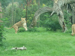"""Longleat Safari Park • <a style=""""font-size:0.8em;"""" href=""""http://www.flickr.com/photos/81195048@N05/8017613949/"""" target=""""_blank"""">View on Flickr</a>"""